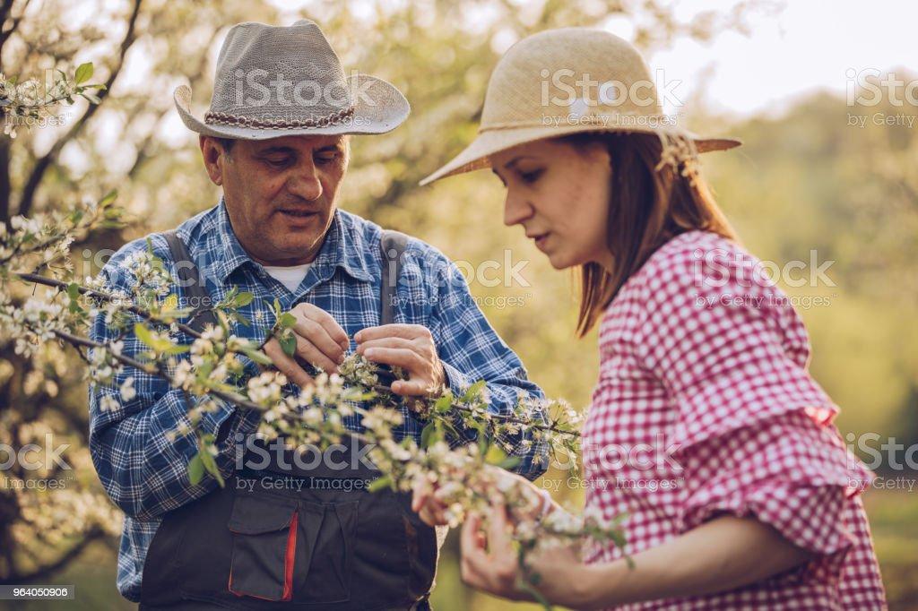 Enjoying in orchard - Royalty-free Active Seniors Stock Photo