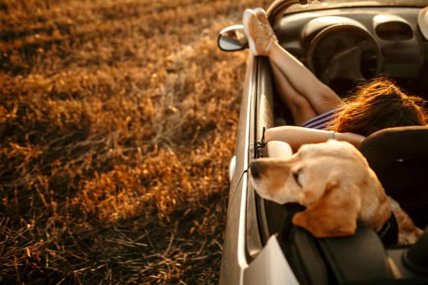 Enjoying sunset with my dog stock photo