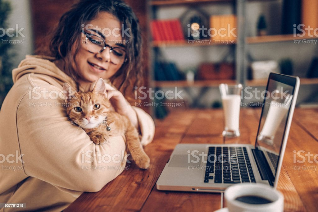 Enjoying working with my cat at home stock photo