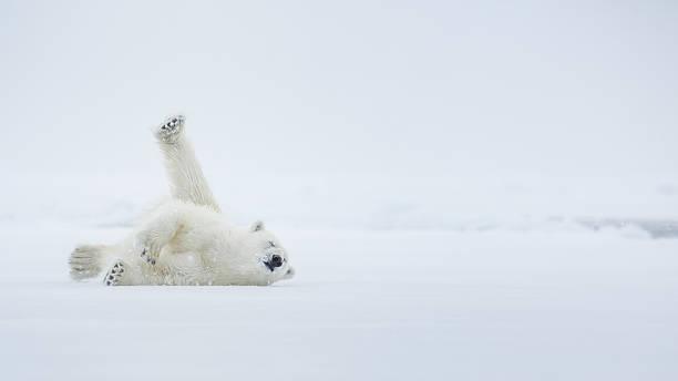 Cтоковое фото Наслаждение на льду
