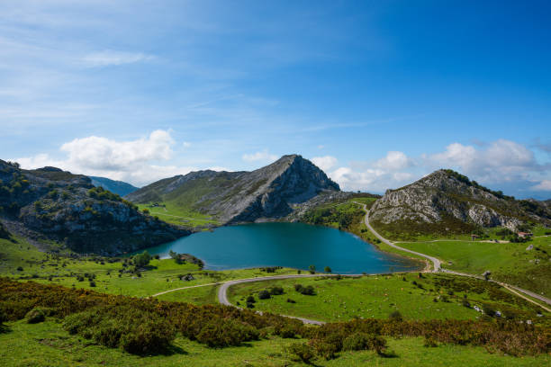 Enol lake in mountains with cows and sheeps on green pasture