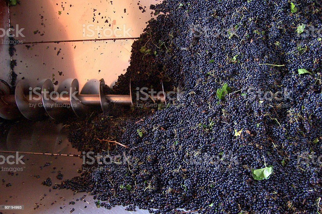 Enough grapes for you? stock photo