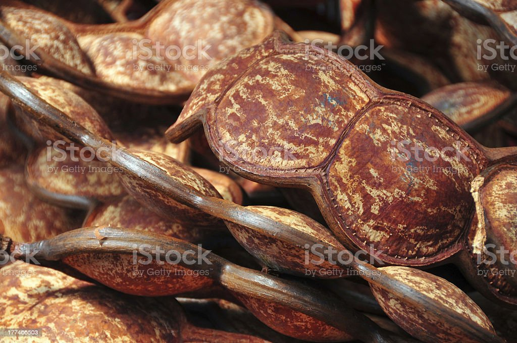 Entada pods - the world's longest legume, Mamoudzou, Mayotte stock photo