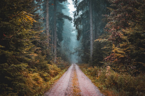 Enter if you dare Taken in the black forest in Germany, there had been alot of rain this day, we took a turning of the main road in search of some adventure and we found it. forest stock pictures, royalty-free photos & images