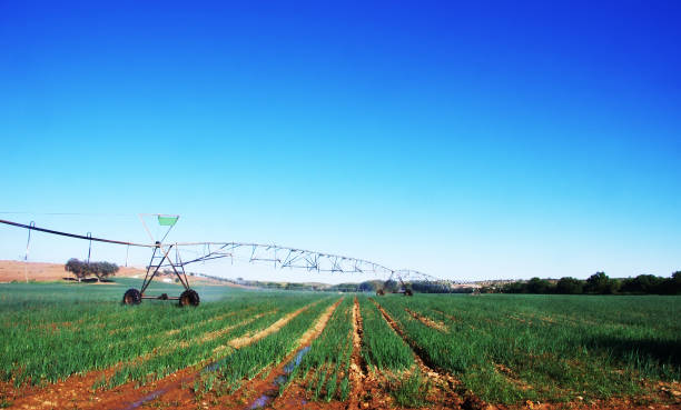 enter pivot irrigation in agricultural field of onion cultivation stock photo