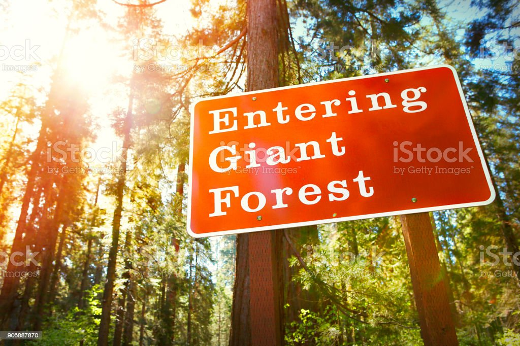 Entering giant sequoia forest information sign stock photo