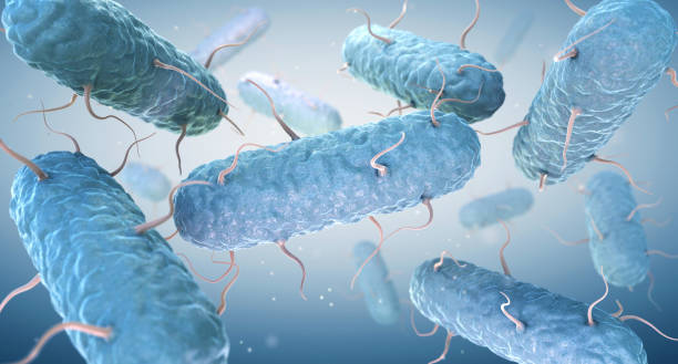 Enterobacteria. Enterobacteriaceae are a large family of Gram-negative bacteria stock photo