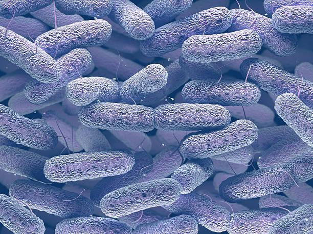 Enterobacteriaceae Bacteria Family - foto de stock
