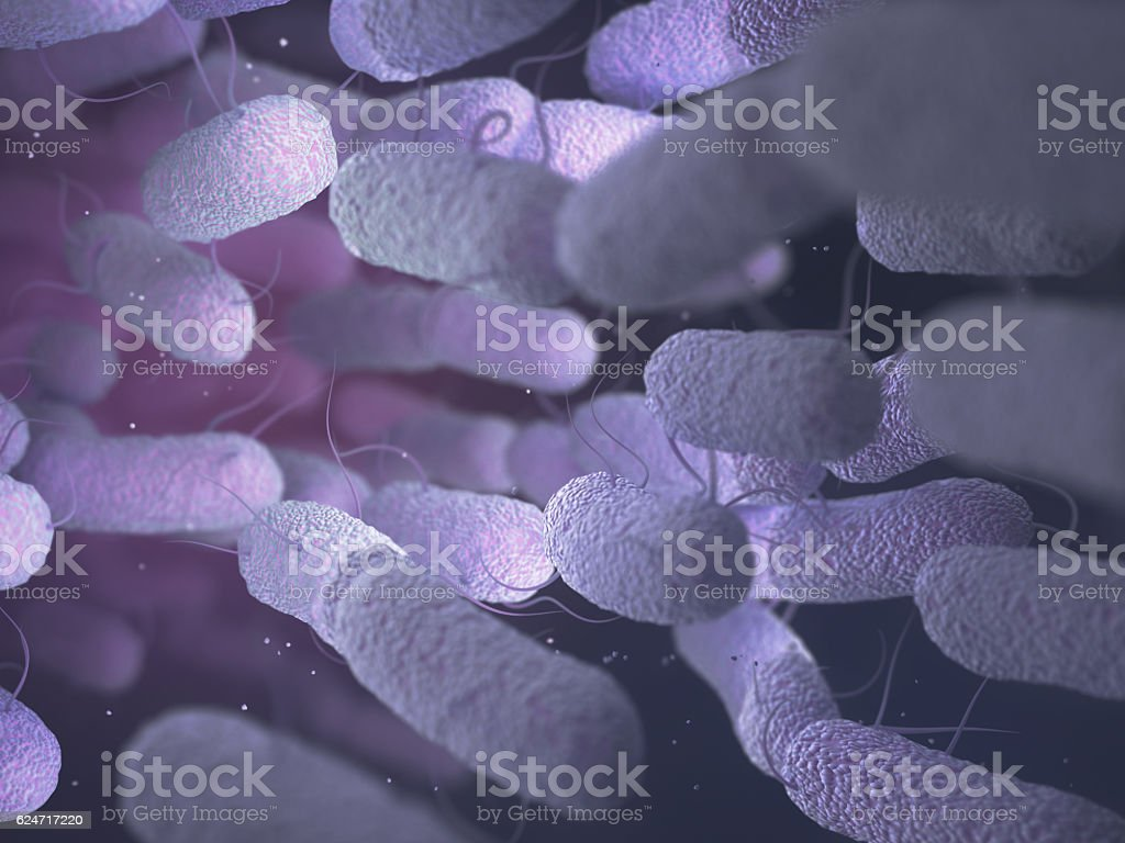 Enterobacteriaceae Bacteria Family stock photo