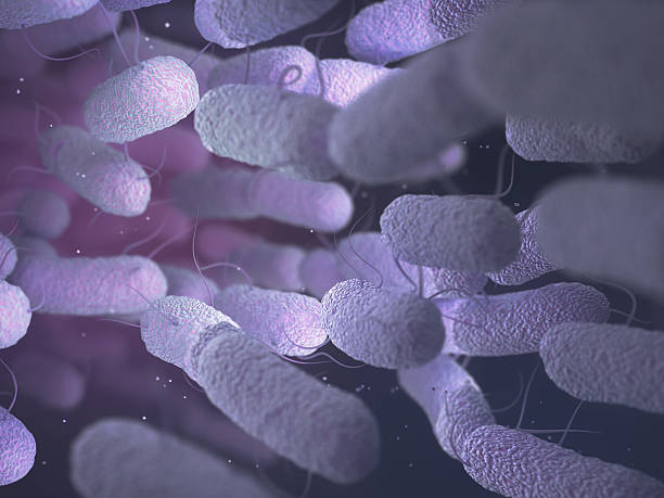 Enterobacteriaceae Bacteria Family Enterobacteriaceae: large family of Gram-negative bacteria that includes many of the more familiar pathogens, such as Salmonella and Escherichia coli. gram stain stock pictures, royalty-free photos & images