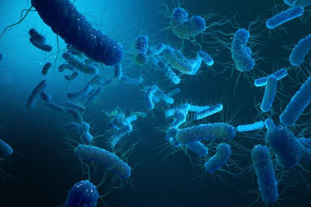 enterobacterias gram negativas proteobacteria, bacteria such as salmonella, escherichia coli, yersinia pestis, klebsiella. 3d illustration. - patogeno foto e immagini stock