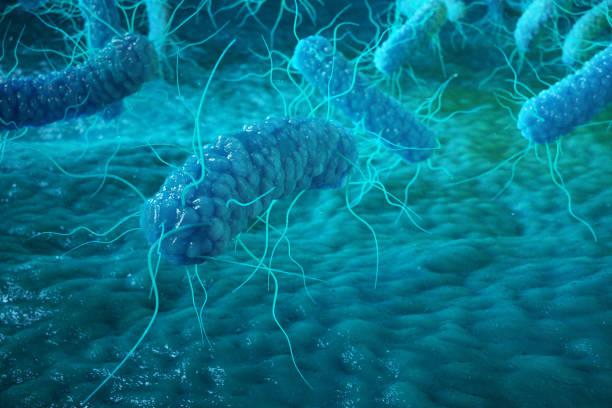 Enterobacterias Gram negativas Proteobacteria, bacteria such as salmonella, escherichia coli, yersinia pestis, klebsiella. 3D rendering. Enterobacterias Gram negativas Proteobacteria, bacteria such as salmonella, escherichia coli, yersinia pestis, klebsiella. 3D rendering gram stain stock pictures, royalty-free photos & images