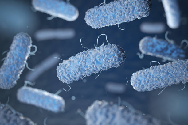 Enterobacterias. Bacterias Gram-negativos escherichia coli, salmonella, klebsiella, legionella, tuberculosis de la micobacteria, pestis de yersinia y shigella, proteus, enterobacter, serratia y citrobacter. - foto de stock