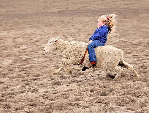 enthusiastic mutton bustin rodeoing little girl - humor stock photos and pictures