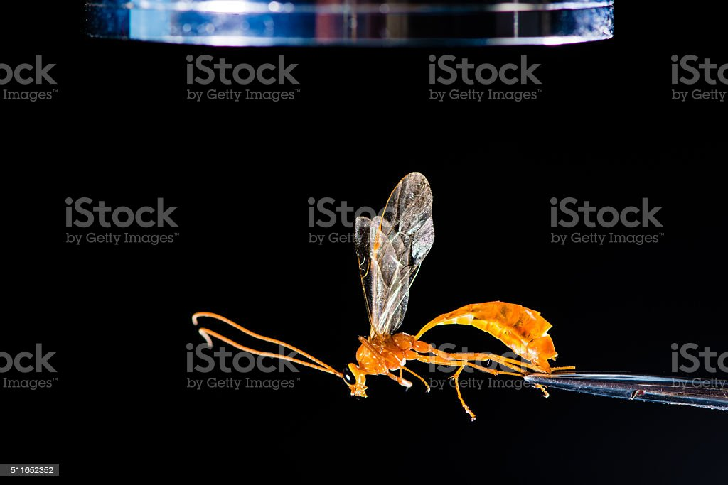 Entomological equipment with wasp stock photo