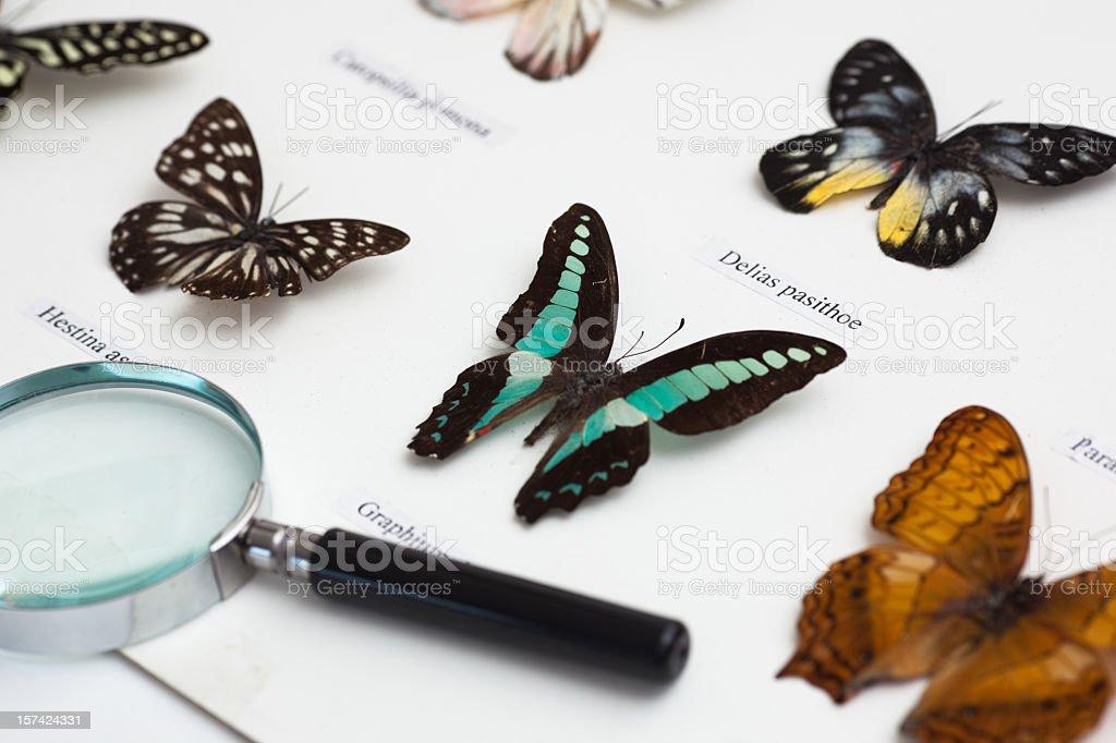 Entomology stock photo