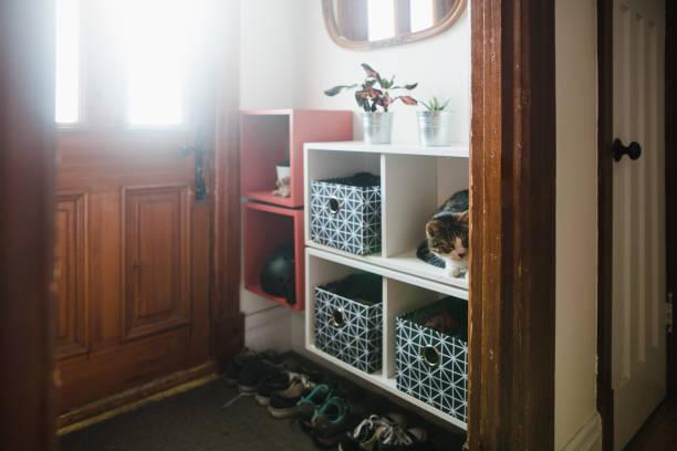 玄関収納と猫 - 玄関 ストックフォトと画像