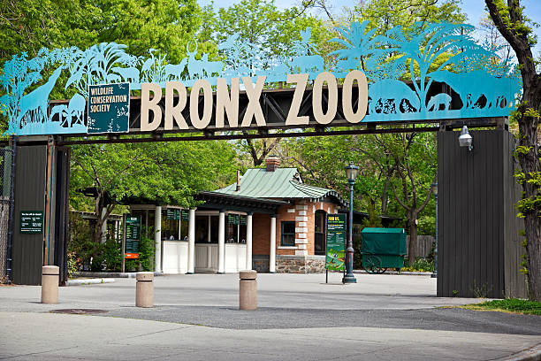 Entrance of Bronx Zoo New York City, USA - May 7, 2013: View on Bronx Zoo entrance. The Bronx Zoo is located in the Bronx borough of New York City, within Bronx Park. It is one of the world's largest metropolitan zoos. With 265 acres of wildlife habitats and attractions, the Bronx Zoo is the flagship of the Wildlife Conservation Society's collection of urban wildlife parks. entrance sign stock pictures, royalty-free photos & images