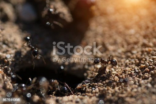 istock Entrance of the Anthill macro photo ant 867644998