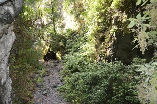 Eingang zu einer Höhle im Wald von Los Tilos auf der Insel La Palma. Reisen, Natur, Urlaub, Geologie. – Foto