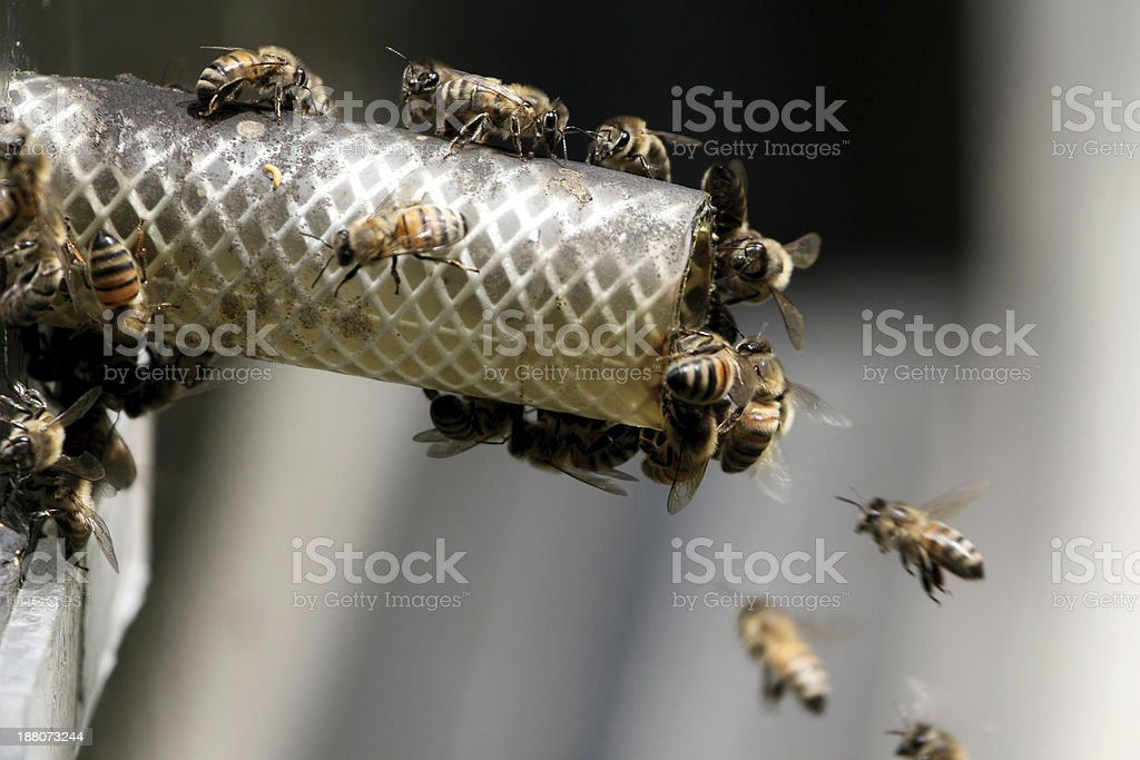 Entrance to hive royalty-free stock photo