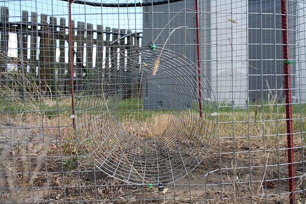 eingang zum elster falle auf der farm - sich im kreis drehen stock-fotos und bilder