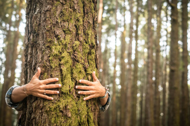Environment and respect for Earth nature concept - adult woman hugging a green tree in the forest - save the planet and climate change - defocused background wih nature stock photo