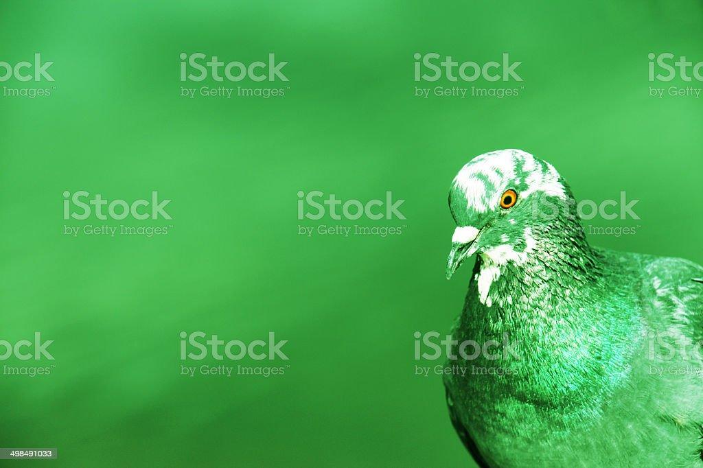 Environment, Bird dove, Green Background stock photo