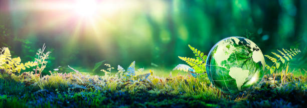 Environment Concept - Globe Glass In Green Forest With Sunlight stock photo