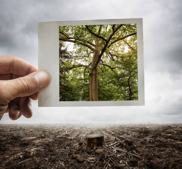 Environment conservation concept Environment conservation concept, male hand holding photograph with tree on it deforestation stock pictures, royalty-free photos & images