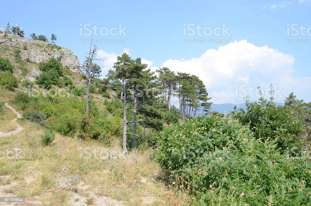 Environment, Crimea photo libre de droits