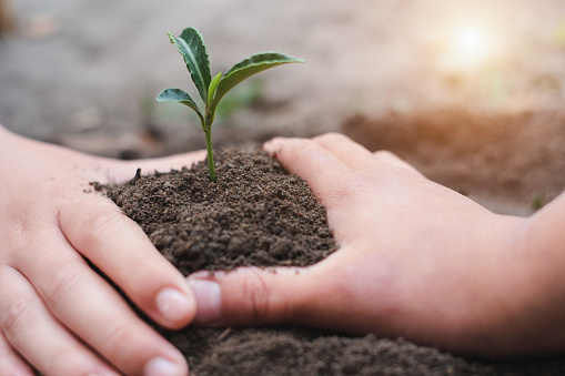 912882270 istock photo Environment Day Trees that grow from fertile soil and hands are about to use the soil to nourish the trees. Create fresh air and preserve global warming by planting trees. 1257679832