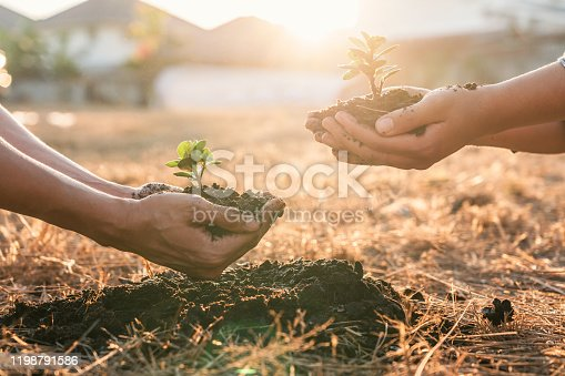 Environment earth day in hands, two people holding of young sprout trees growing seedlings, protection for care new generation to be planted into the soil in the garden as save world concept.