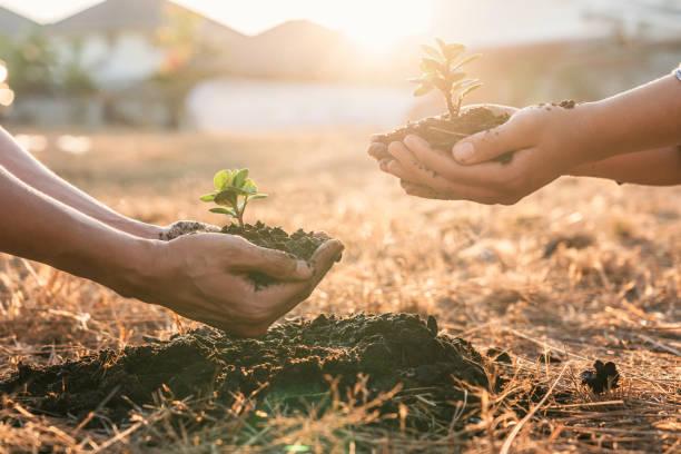 milieu aarde dag in handen, twee mensen houden van jonge sprout bomen groeiende zaailingen, bescherming voorzorg nieuwe generatie te worden geplant in de bodem in de tuin als save world concept - herbebossing stockfoto's en -beelden