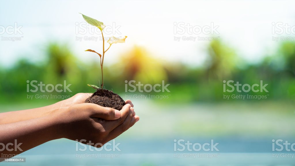 Environment Earth Day In the hands of trees growing seedlings. Bokeh green Background male hand holding tree on nature field grass Forest conservation concept. stock photo