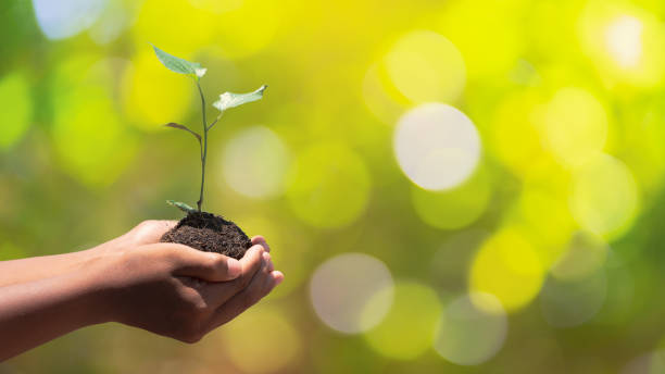 environment earth day in the hands of trees growing seedlings. bokeh green background male hand holding tree on nature field grass forest conservation concept. - earth day stock pictures, royalty-free photos & images