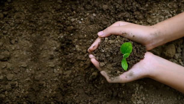 çevre dünya günü ağaçların elinde fide büyüyen. doğa alan çim üzerinde bokeh yeşil arka plan kadın el tutma ağacı orman koruma konsepti - diken bitki niteliği stok fotoğraflar ve resimler