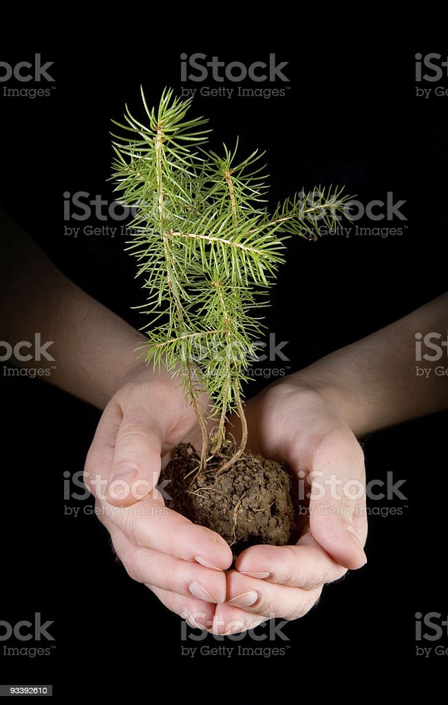 Environment royalty-free stock photo
