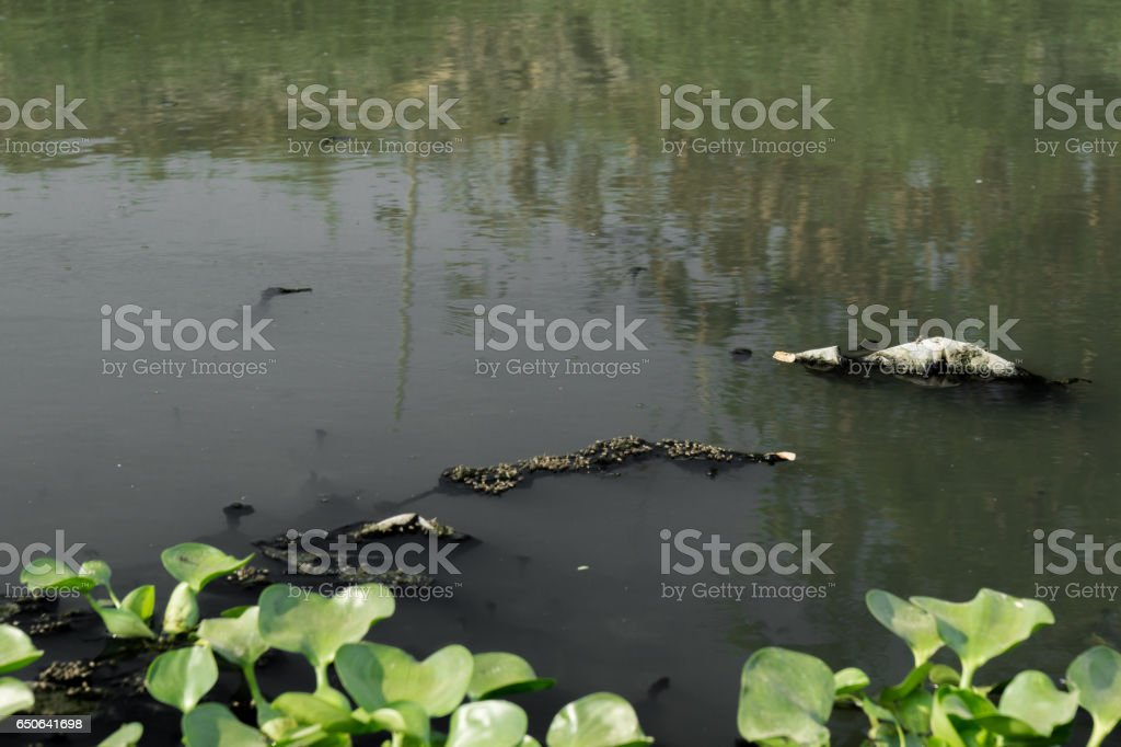 Environment problem, waste water, industrial sewage stock photo