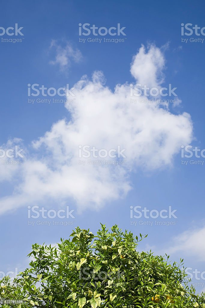Environment Protection royalty-free stock photo