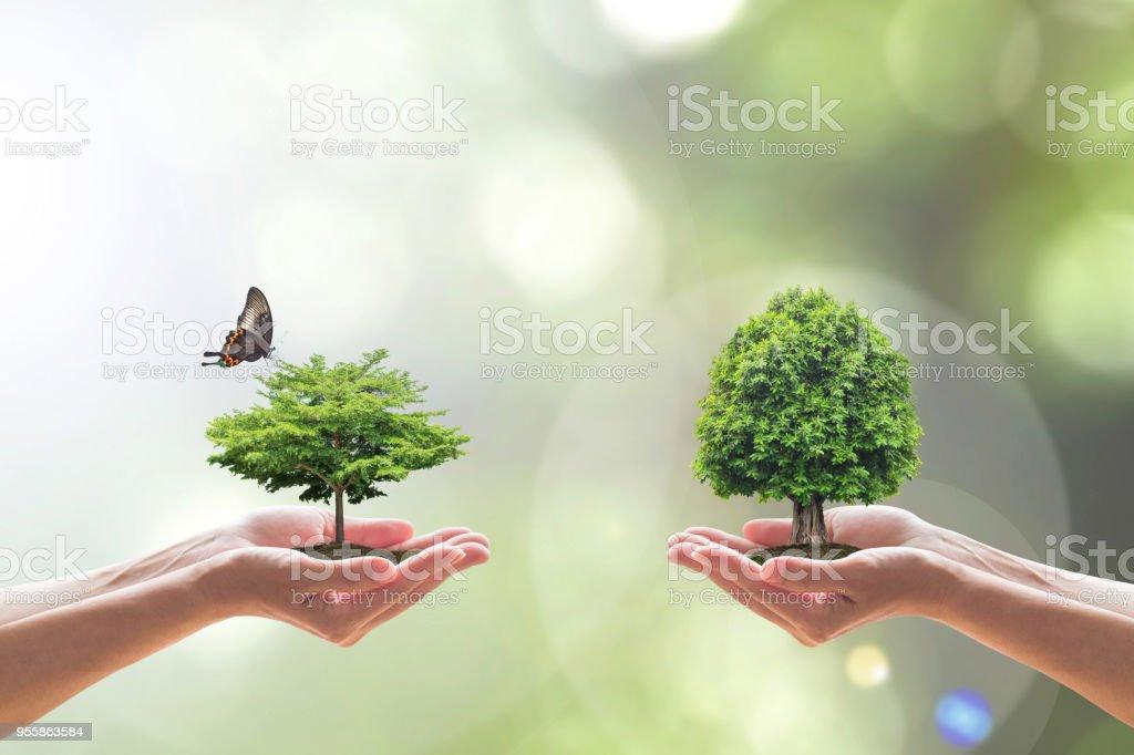 Medio ambiente biodiversidad en concepto de ecosistema con biodiversidad en especies de árboles, siembra y la ahorro vida biológica en un ambiente limpio en manos de voluntarios - foto de stock