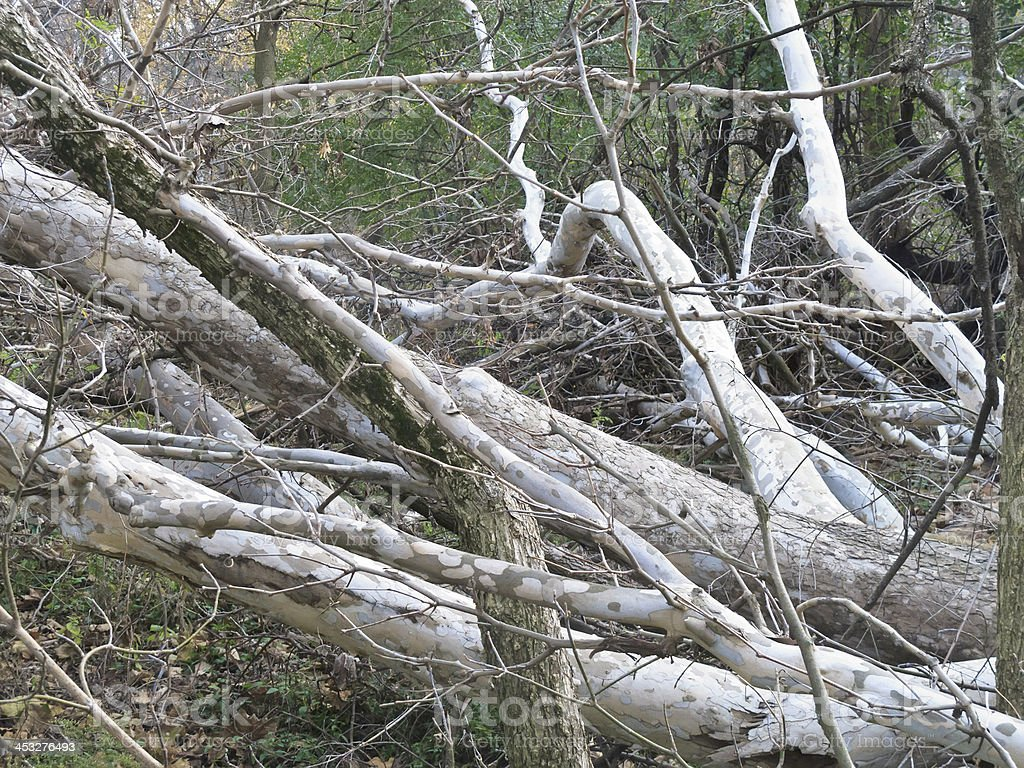 Environmental casualties of clearance in a forest preserve royalty-free stock photo