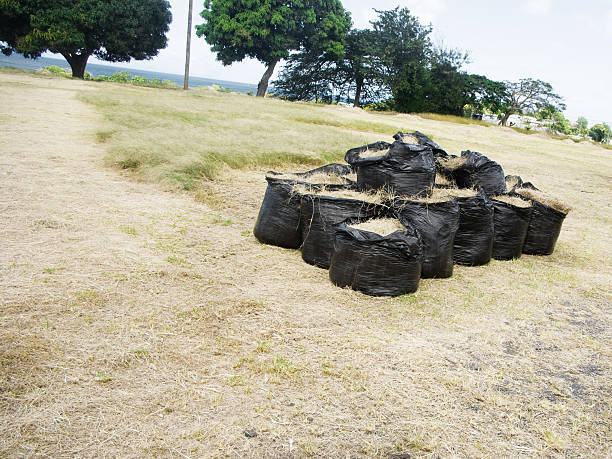 environmental cleanup; green waste collected in garbage bags - bioremediation stock photos and pictures