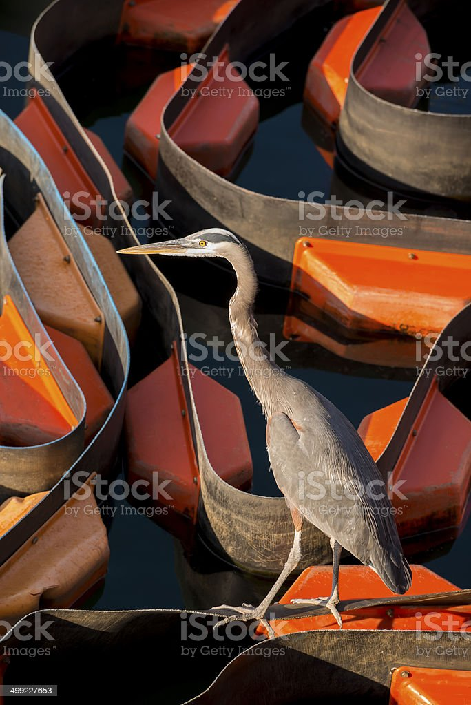 Environmental Concept royalty-free stock photo