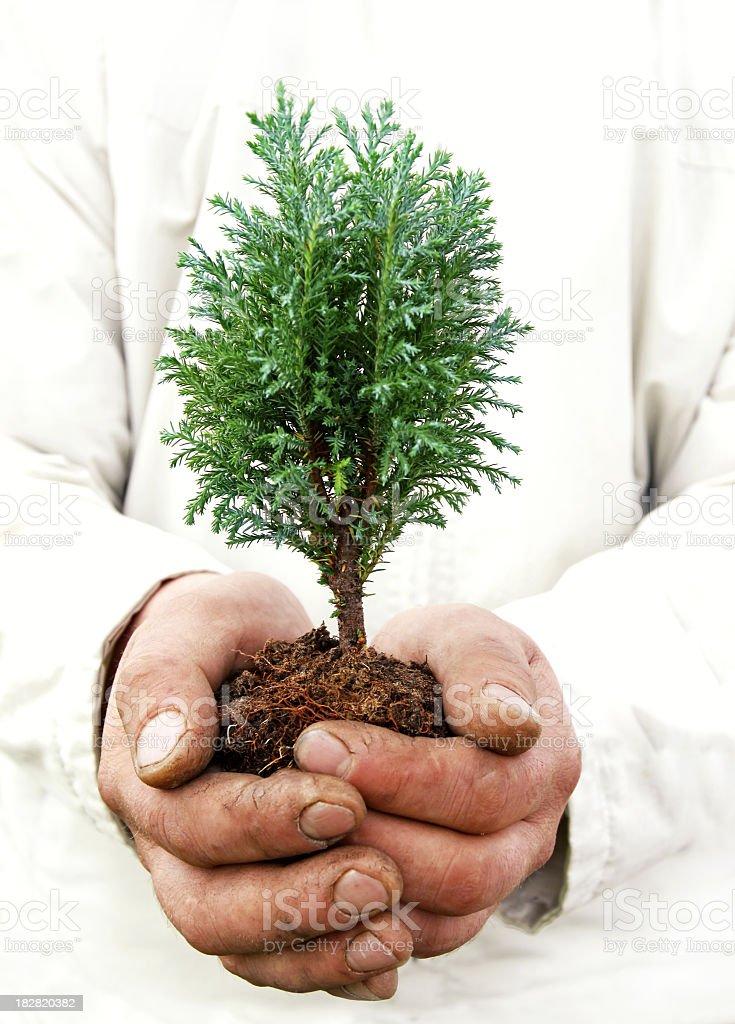 Environmental Conservation symbol royalty-free stock photo