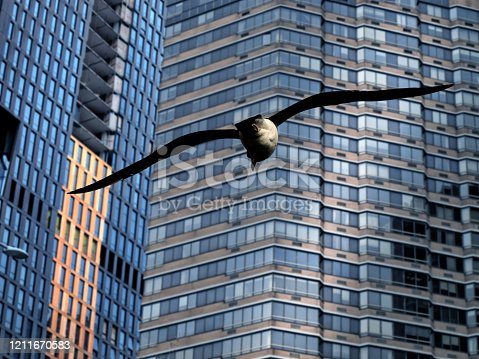 Close up modern architecture, building exterior and flying seagull in Manhattan, New York