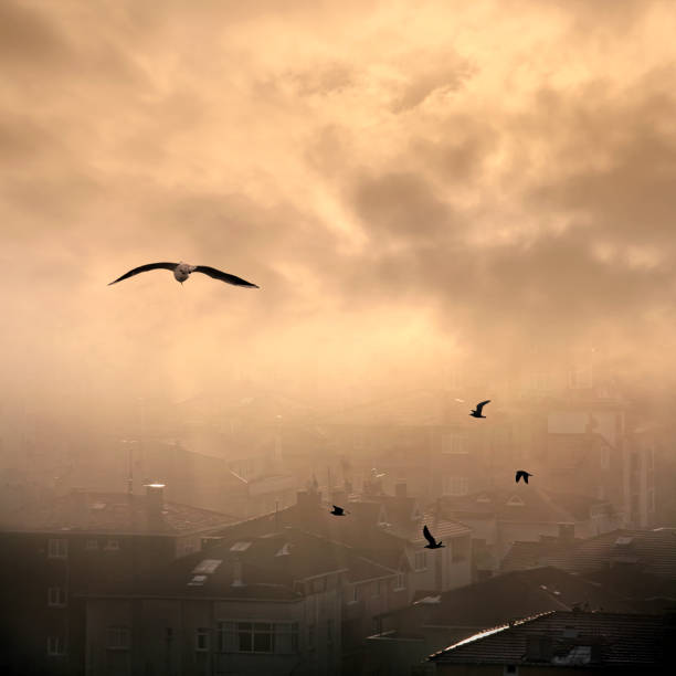 environmental pollution concept of smog and cityscape stock photo