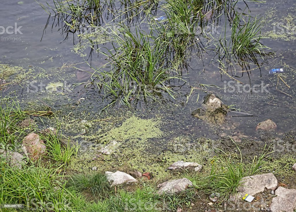 Environmental pollution. Contamination of the environment. Polluted river. stock photo