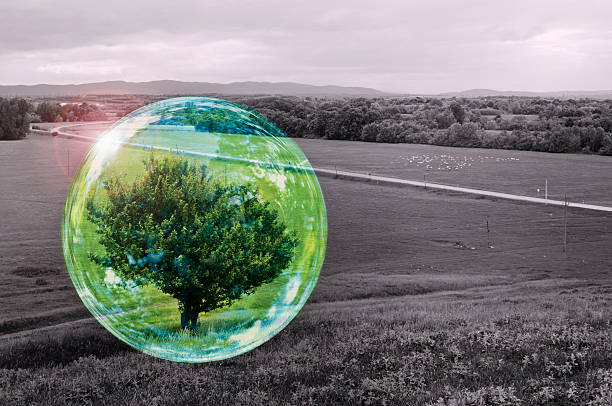 Environmental protection concept - tree in a bubble. stock photo