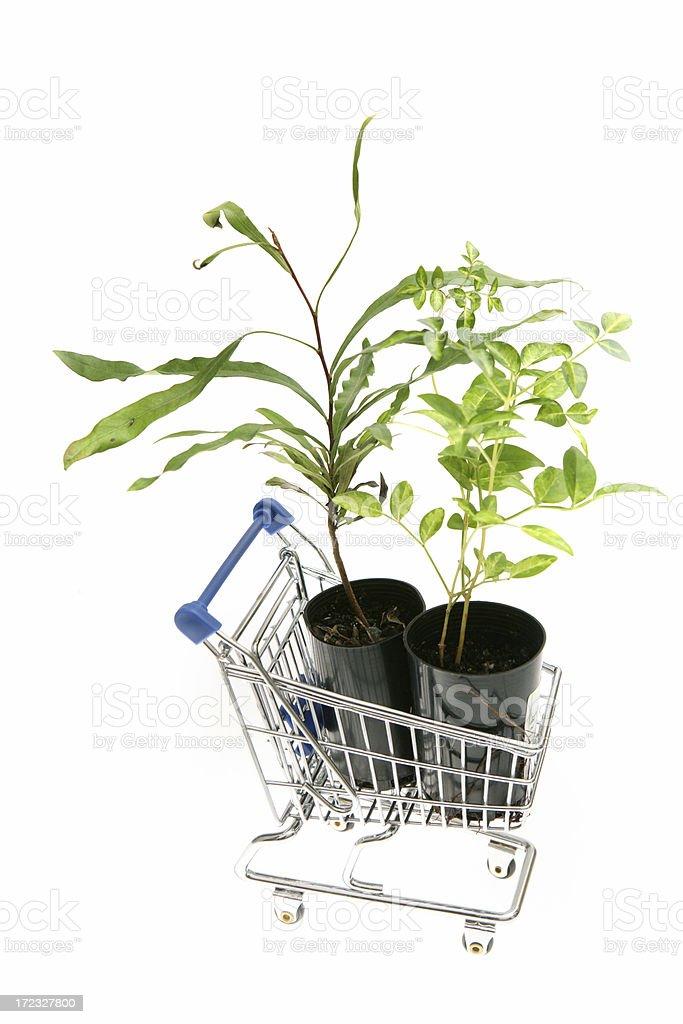Environmental Shopping royalty-free stock photo